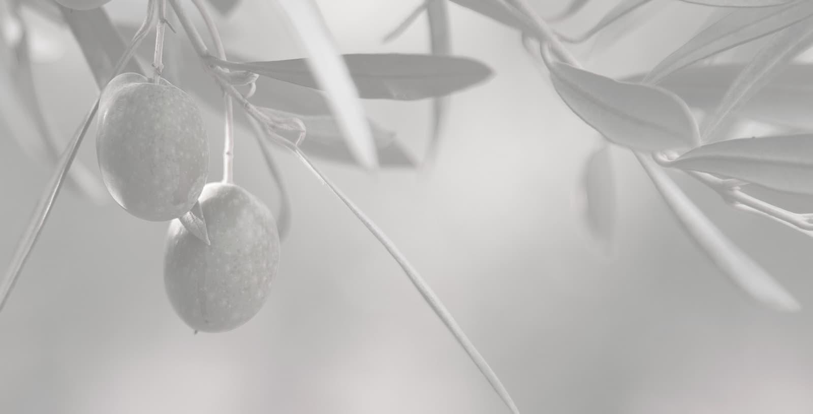 Vision Torrent olives
