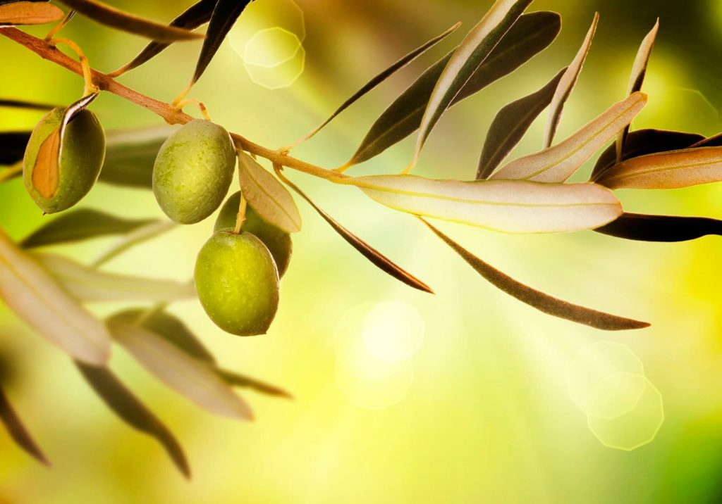 difference between black and green olives